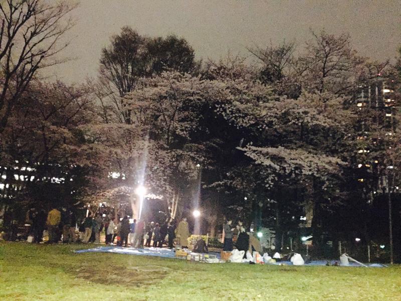 新宿中央公園で花見(夜桜)