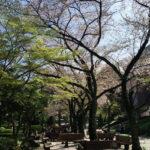 東京競馬場は東京で一番穴場の花見スポットなんじゃないだろうか